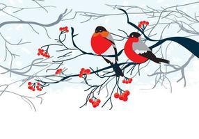 Scheda con uccelli sul ramo vettore
