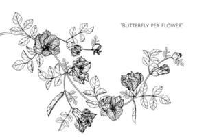 disegno disegnato a mano del fiore e delle foglie del pisello di farfalla