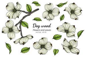 fiori e foglie bianchi disegnati a mano del corniolo vettore