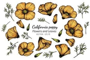 fiore arancione disegnato a mano del papavero della California