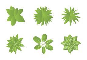 Vista dall'alto di piante Illustrazioni vettoriali