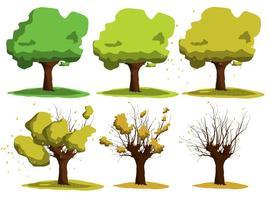 Vettori crescenti dell'albero di acacia