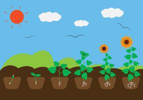 Ciclo di crescita delle piante in vettoriale