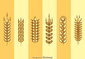 Spiga di grano isolato