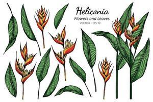 set di fiori di heliconia vettore