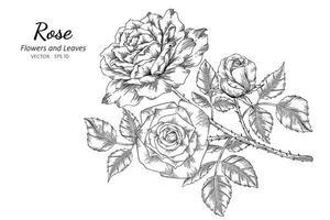fiori e foglie di rosa vettore