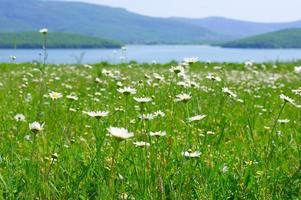 rustig landelijk landschap