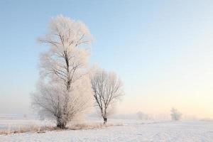 ijzige winterbomen bij zonsopgang