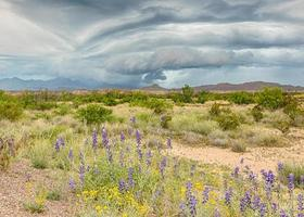 storm over de chisosbergen, nationaal park big bend, tx