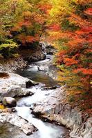 herfstkleuren van de vallei